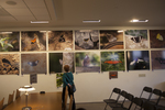 The Butterflies of Iguazu Falls, Agentina exhibit and reception