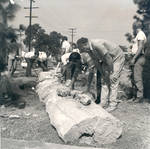 Placing a fossilized tree in front of Hashinger Hall, Chapman College, Orange, California